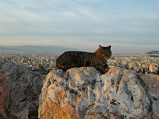 cat above Athens