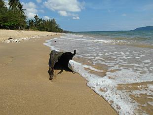 beach details I