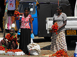 lychee sellers at Pettah Bazaar