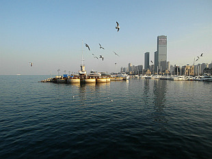 seagulls of Dalian