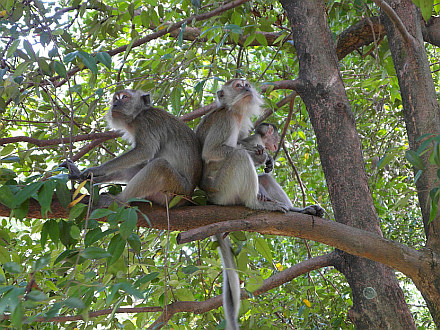 monkeys in Kuala Lumpur Park