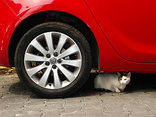 cats love cars... in Istanbul too