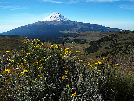 and once more Popocatepetl (5452m) and flowers