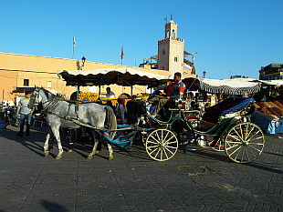 carriage on Jamaa el Fna
