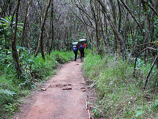 climbing up throught the woods to Mandara Hut