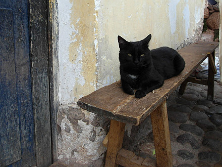 cat from Cuzco