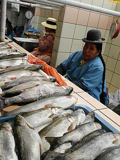 back in Puno, local market fishseller