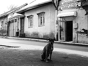 a dog from Tbilisi
